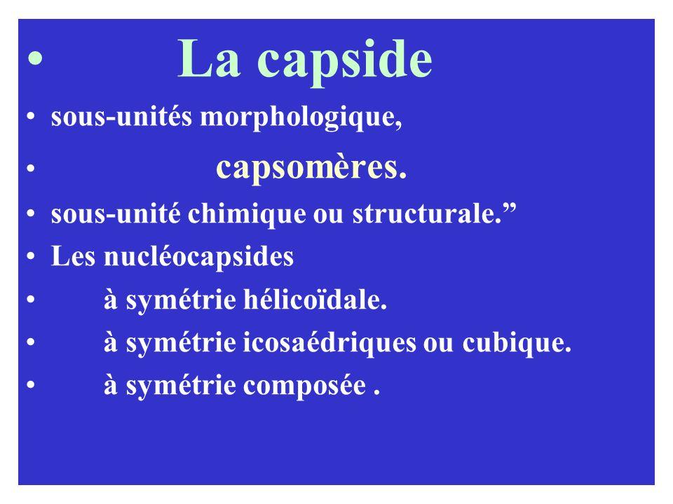 La capside sous-unités morphologique, capsomères.