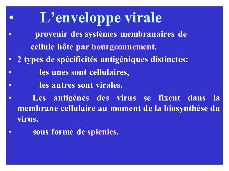 L'enveloppe virale provenir des systèmes membranaires de