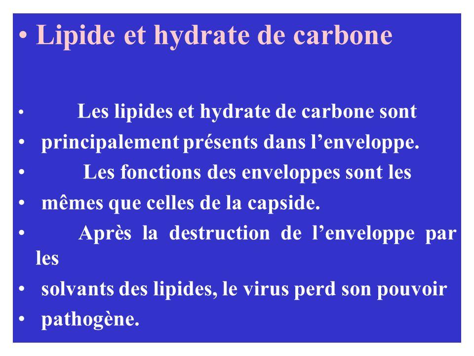 Lipide et hydrate de carbone