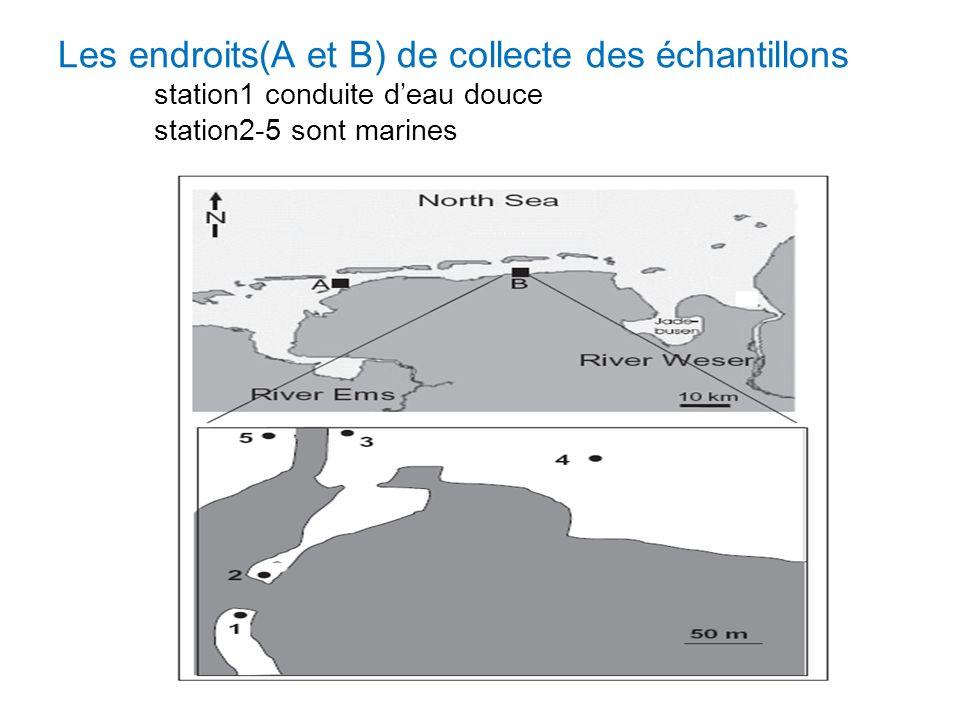 Les endroits(A et B) de collecte des échantillons