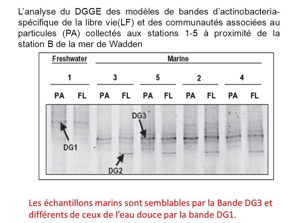L'analyse du DGGE des modèles de bandes d'actinobacteria-spécifique de la libre vie(LF) et des communautés associées au particules (PA) collectés aux stations 1-5 à proximité de la station B de la mer de Wadden