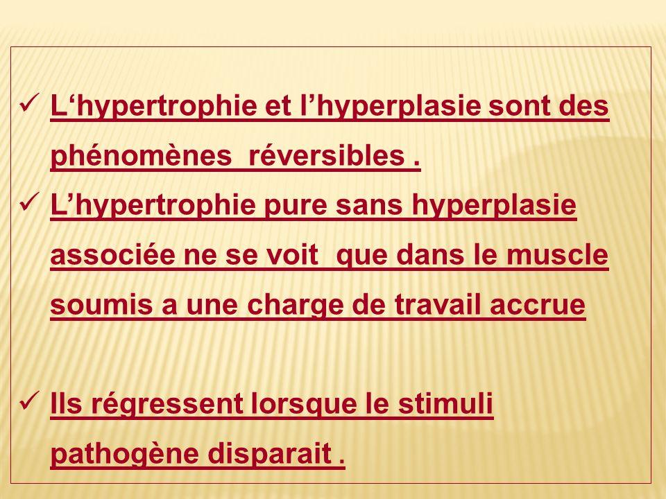 L'hypertrophie et l'hyperplasie sont des phénomènes réversibles .