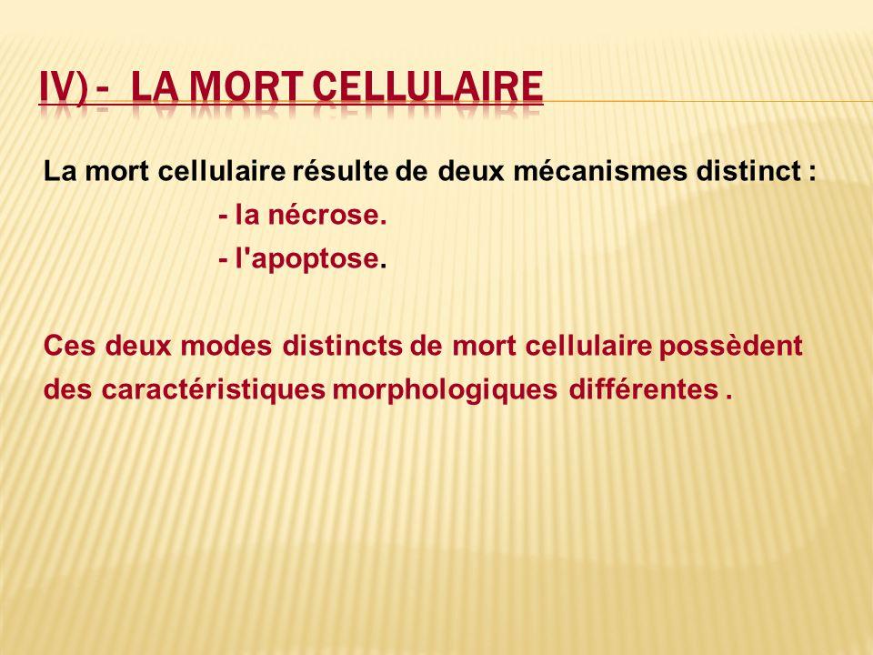 IV) - LA MORT CELLULAIRE