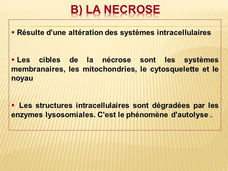 b) LA NECROSE Résulte d une altération des systèmes intracellulaires