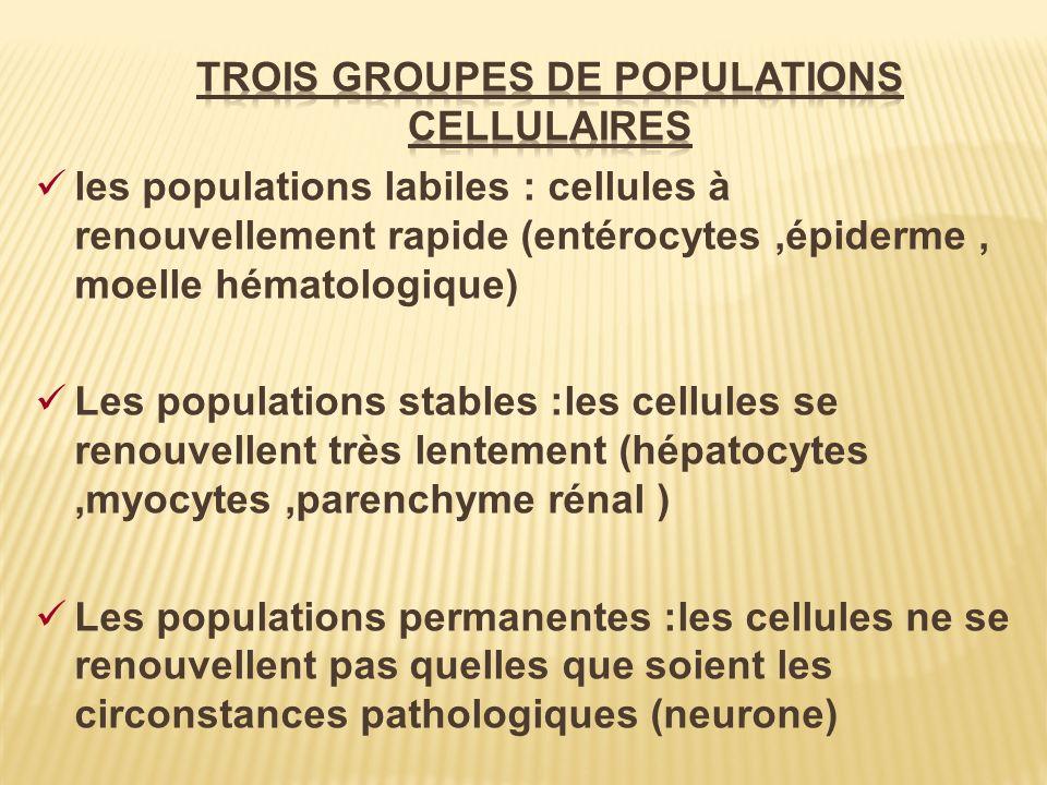 TROIS GROUPES DE POPULATIONS CELLULAIRES