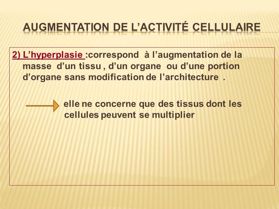 Augmentation de l'activité cellulaire
