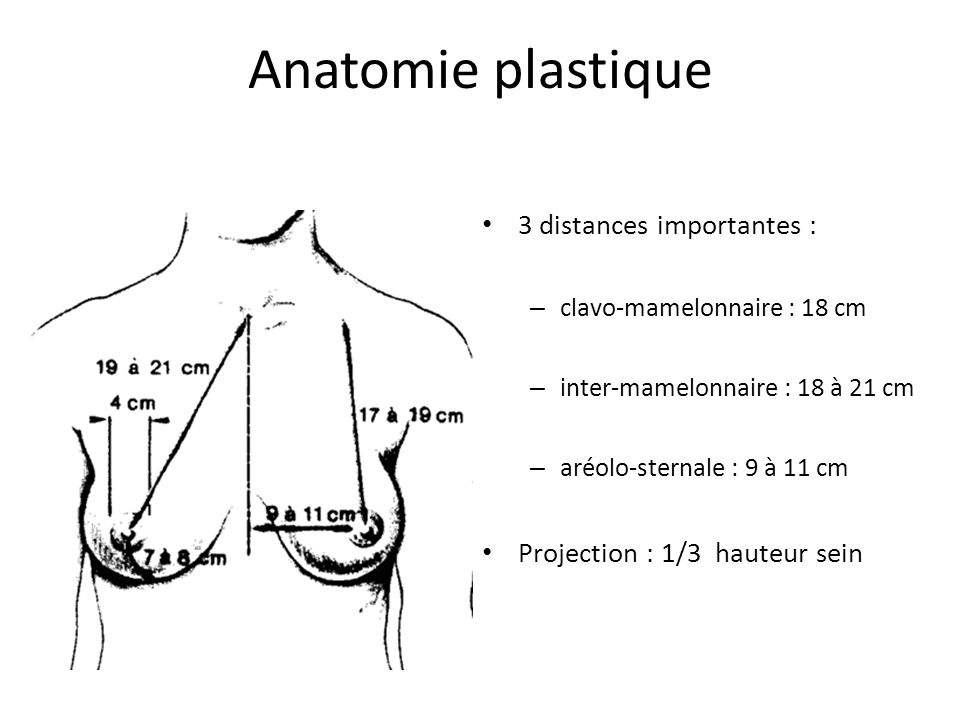 Anatomie plastique 3 distances importantes :