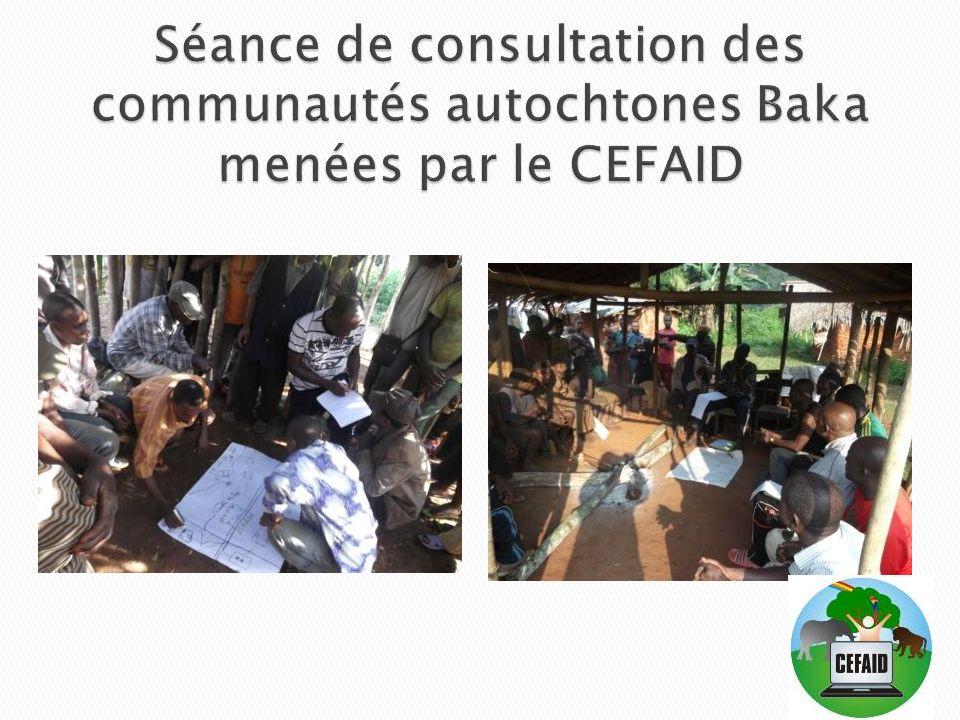 Séance de consultation des communautés autochtones Baka menées par le CEFAID