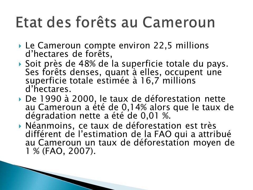 Etat des forêts au Cameroun