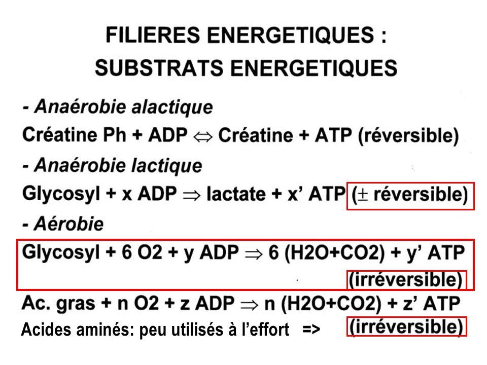 Acides aminés: peu utilisés à l'effort =>