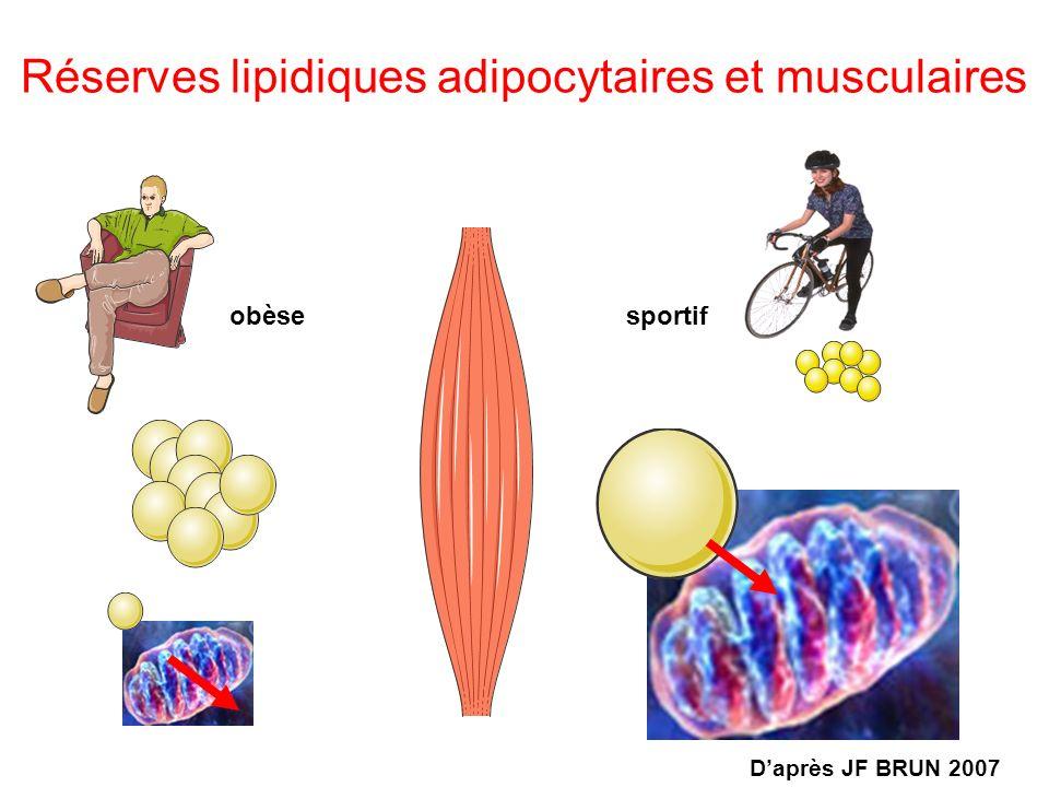 Réserves lipidiques adipocytaires et musculaires