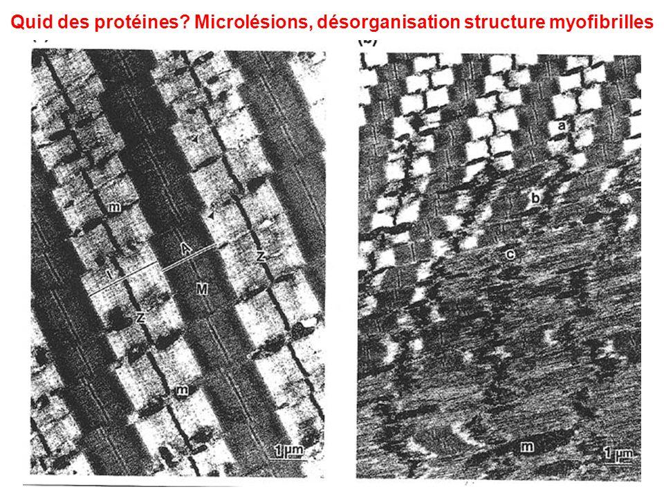 Quid des protéines Microlésions, désorganisation structure myofibrilles
