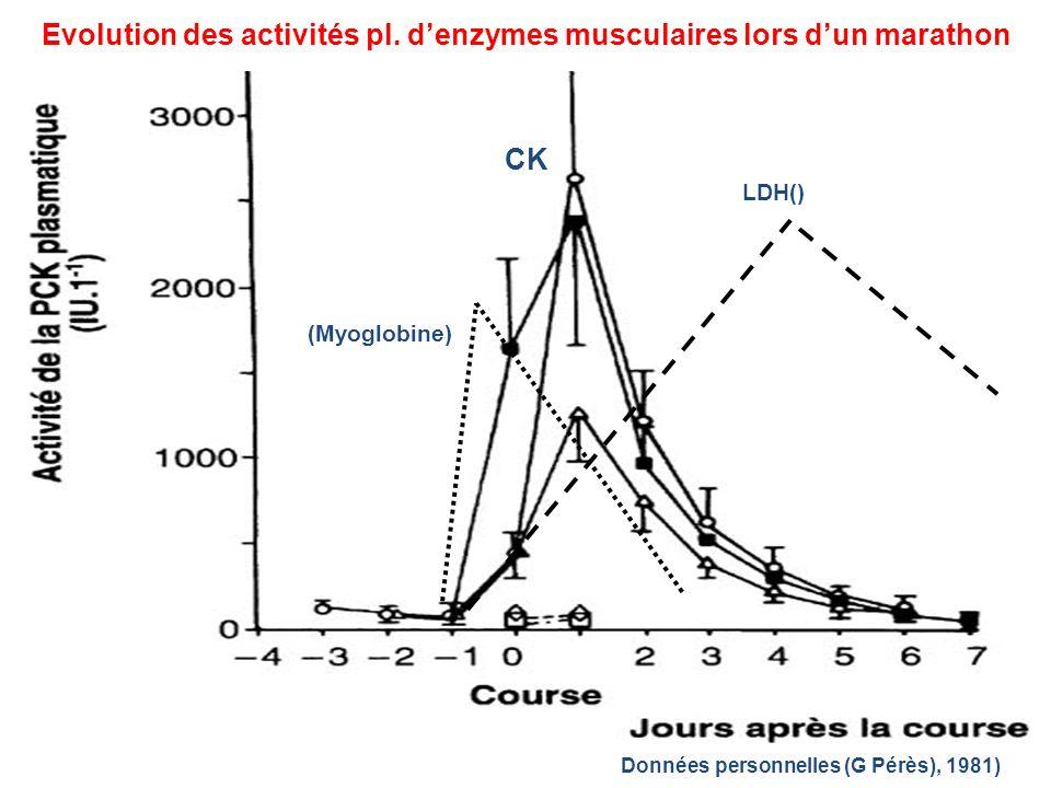 Evolution des activités pl. d'enzymes musculaires lors d'un marathon