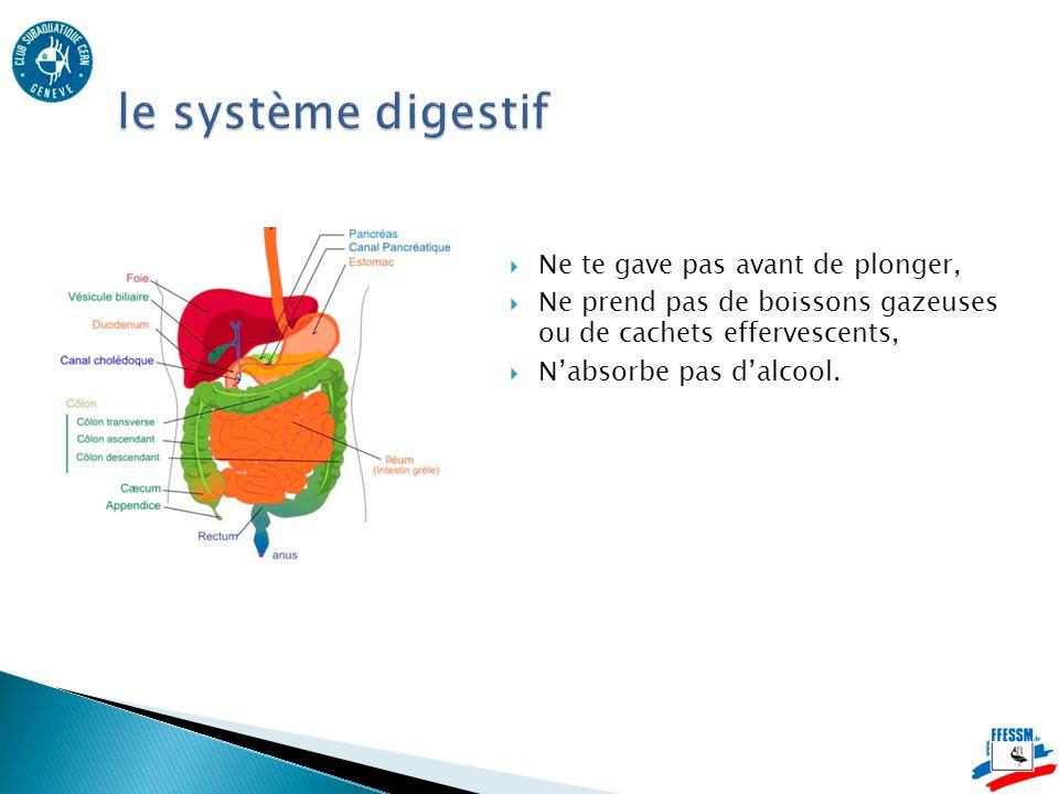 le système digestif Ne te gave pas avant de plonger,
