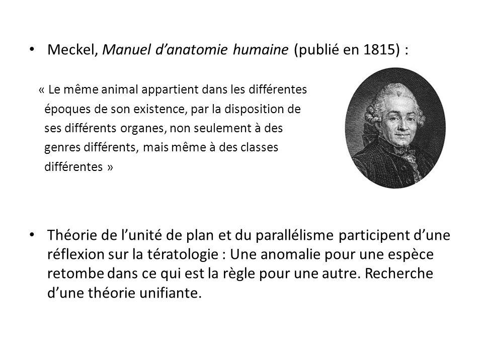 Meckel, Manuel d'anatomie humaine (publié en 1815) :