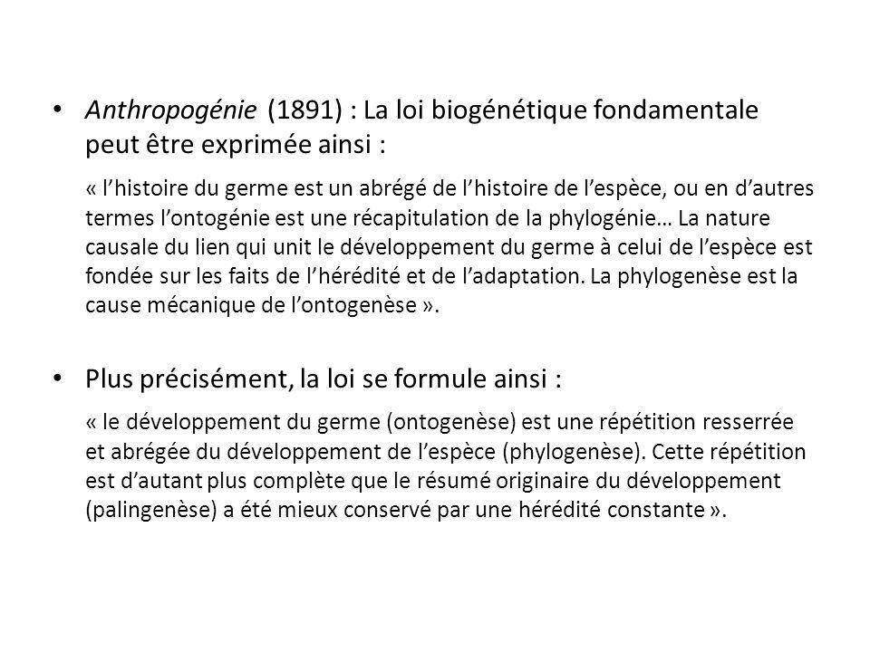Anthropogénie (1891) : La loi biogénétique fondamentale peut être exprimée ainsi :
