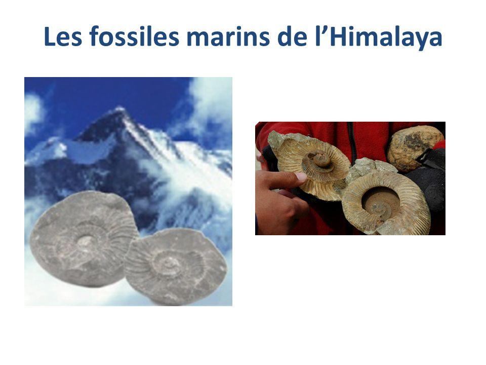 Les fossiles marins de l'Himalaya