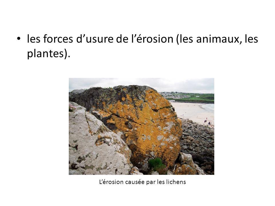 les forces d'usure de l'érosion (les animaux, les plantes).