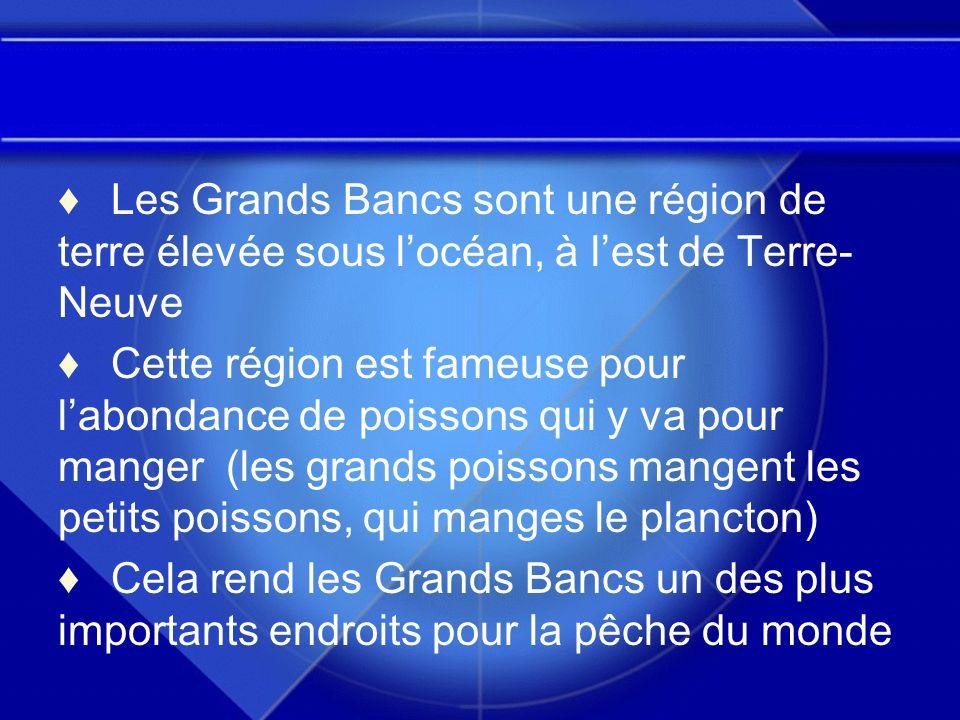 Les Grands Bancs sont une région de terre élevée sous l'océan, à l'est de Terre-Neuve