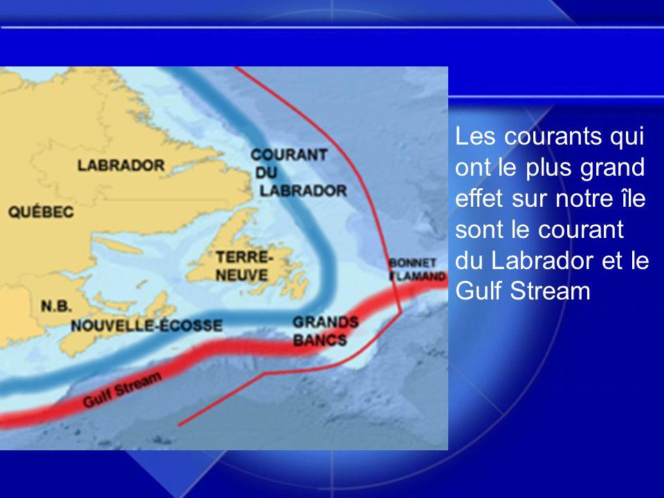 Les courants qui ont le plus grand effet sur notre île sont le courant du Labrador et le Gulf Stream