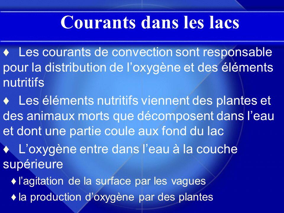 Courants dans les lacs Les courants de convection sont responsable pour la distribution de l'oxygène et des éléments nutritifs.