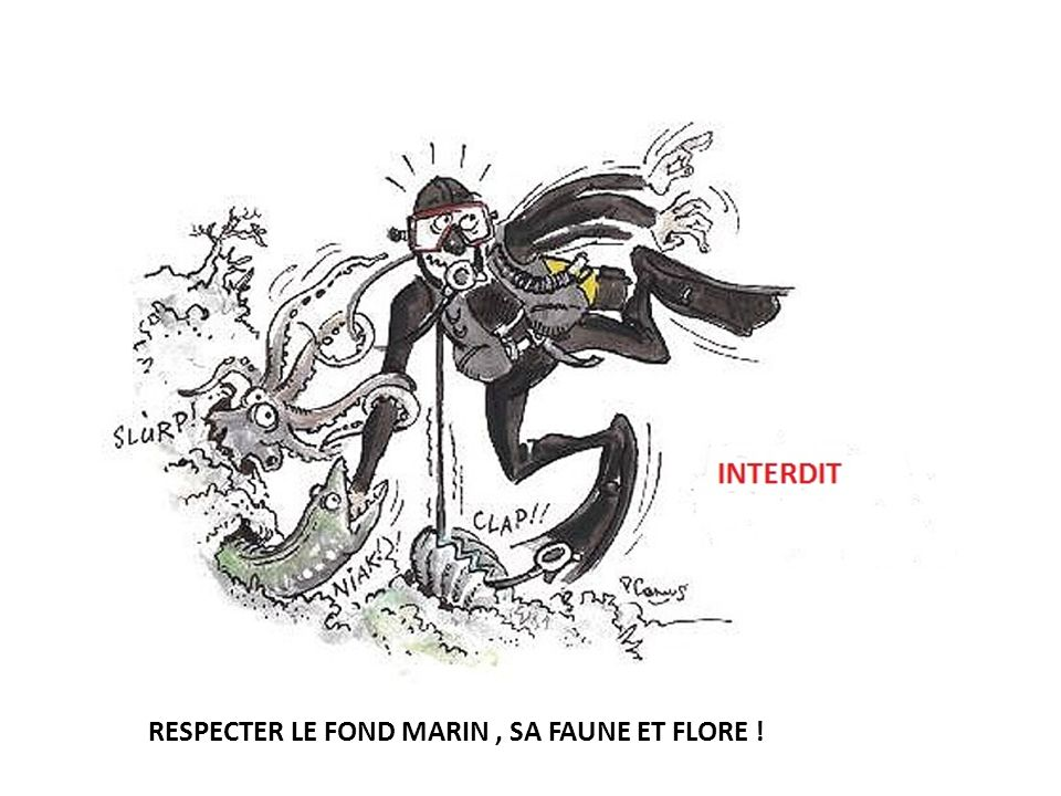 RESPECTER LE FOND MARIN , SA FAUNE ET FLORE !