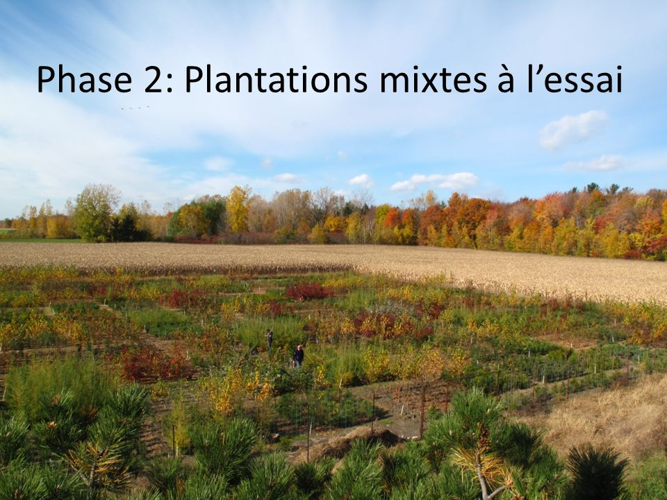 Phase 2: Plantations mixtes à l'essai