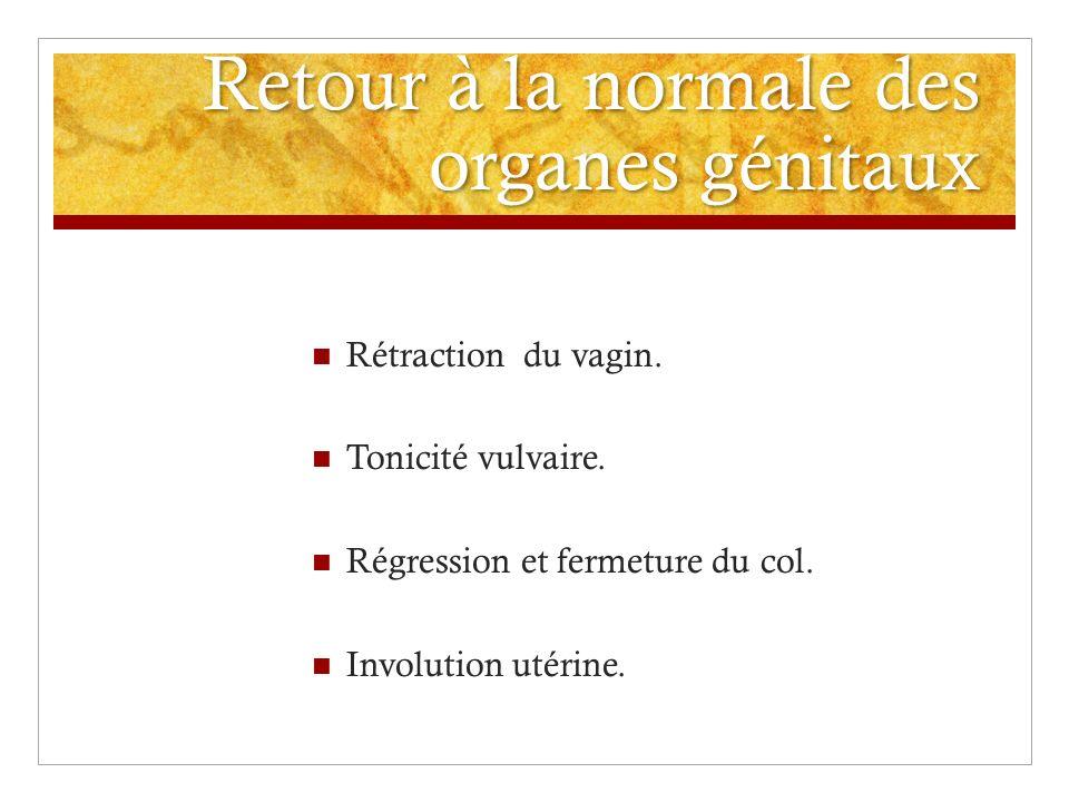 Retour à la normale des organes génitaux