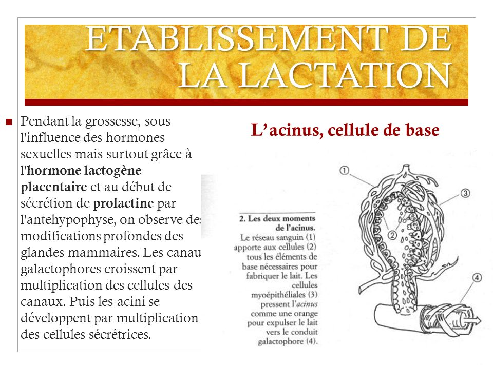 ETABLISSEMENT DE LA LACTATION