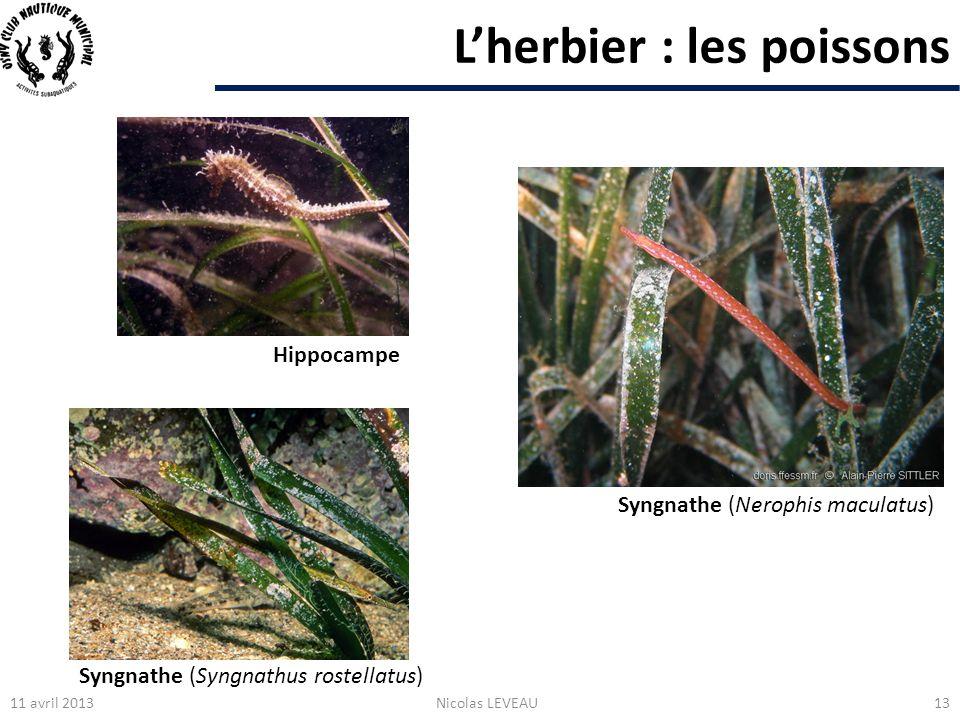 L'herbier : les poissons