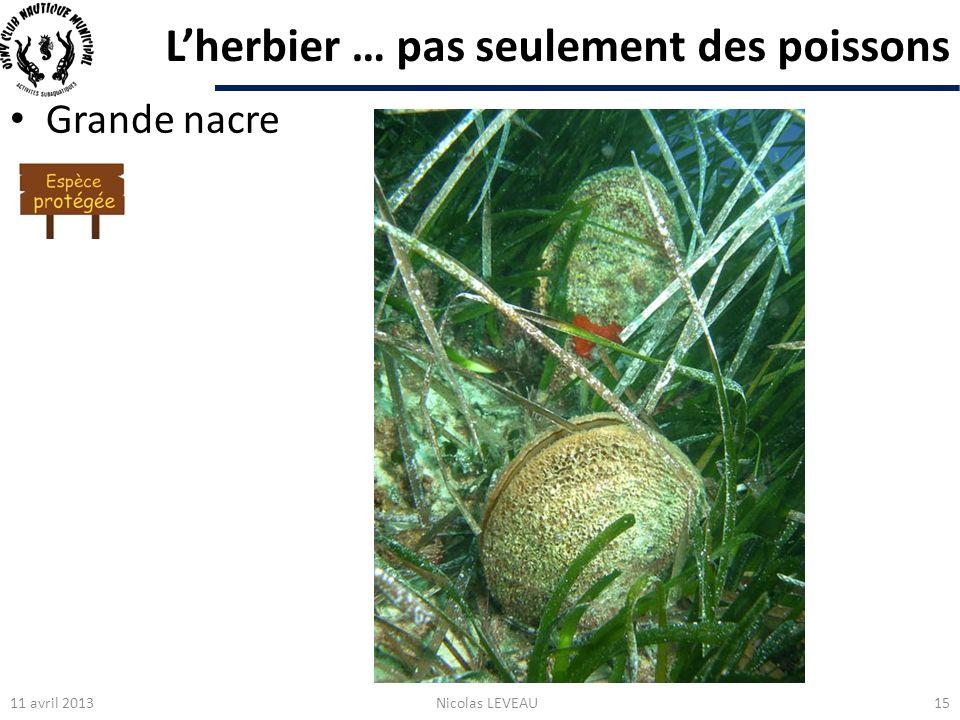 L'herbier … pas seulement des poissons