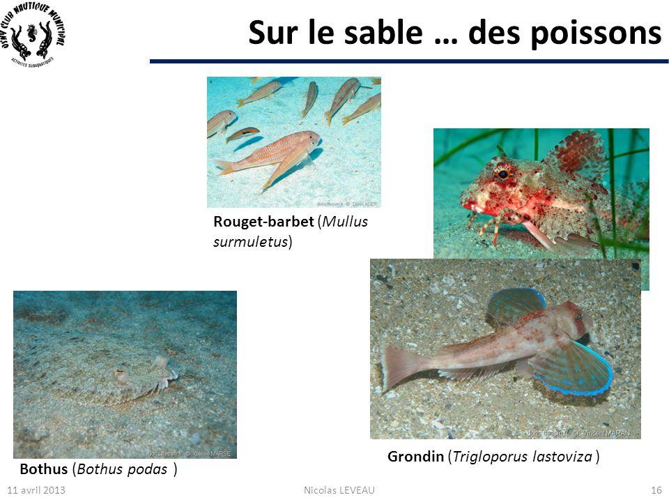 Sur le sable … des poissons