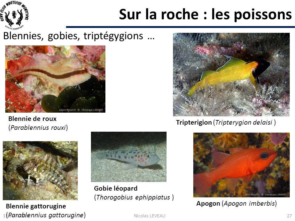 Sur la roche : les poissons