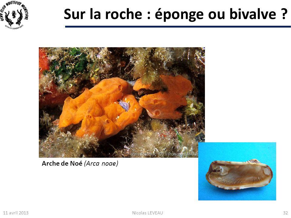Sur la roche : éponge ou bivalve