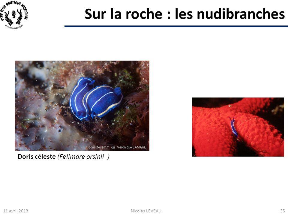Sur la roche : les nudibranches