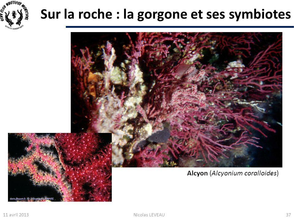 Sur la roche : la gorgone et ses symbiotes