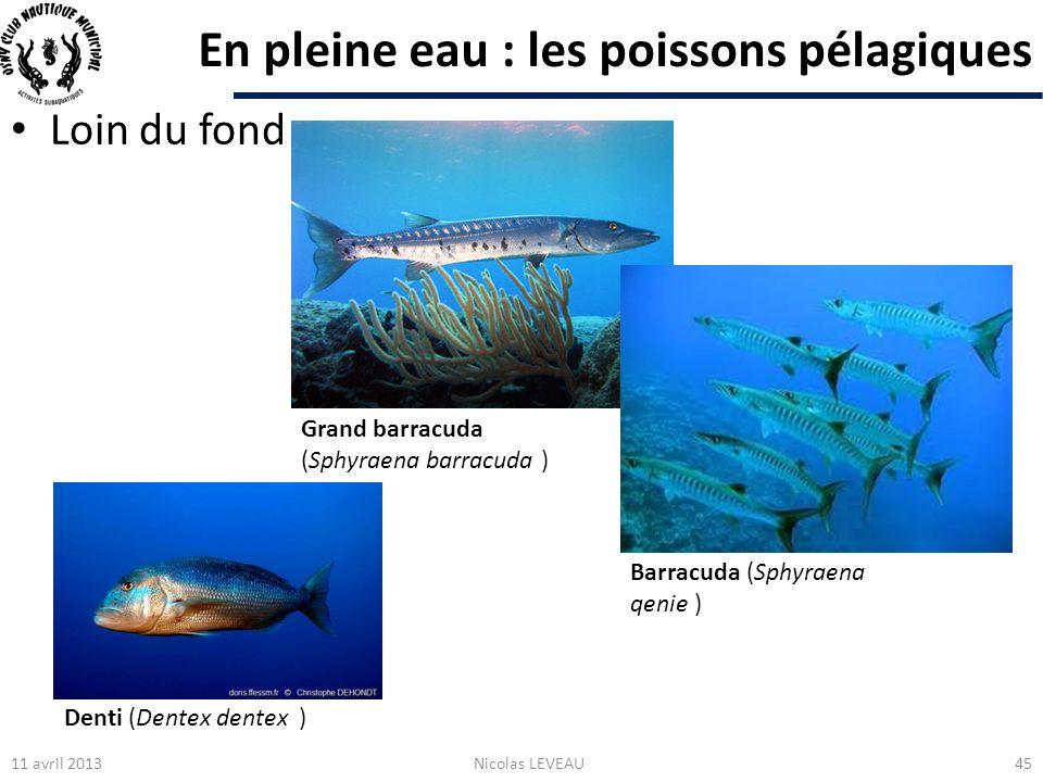 En pleine eau : les poissons pélagiques