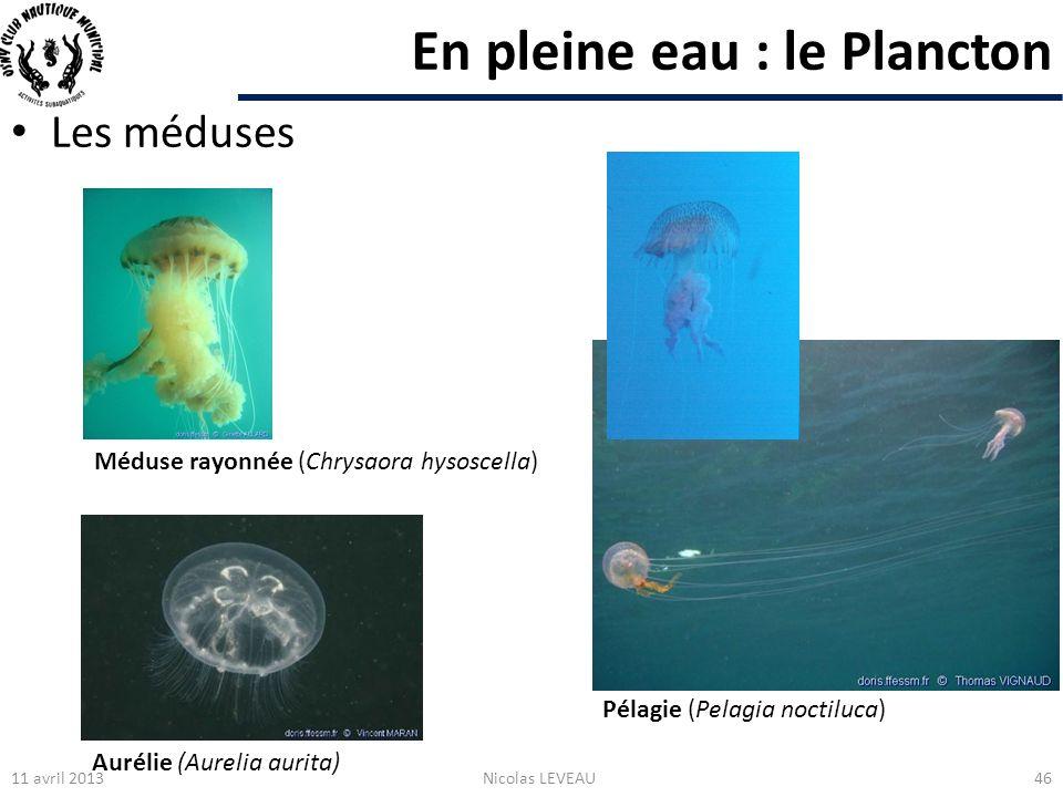 En pleine eau : le Plancton