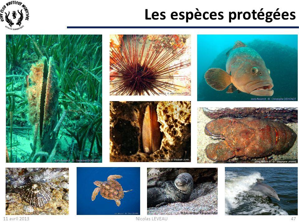 Les espèces protégées Tortue carouane 11 avril 2013 Nicolas LEVEAU