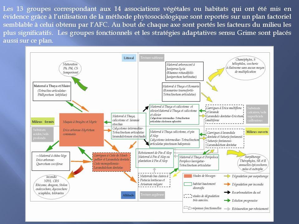 Les 13 groupes correspondant aux 14 associations végétales ou habitats qui ont été mis en évidence grâce à l'utilisation de la méthode phytosociologique sont reportés sur un plan factoriel semblable à celui obtenu par l'AFC.