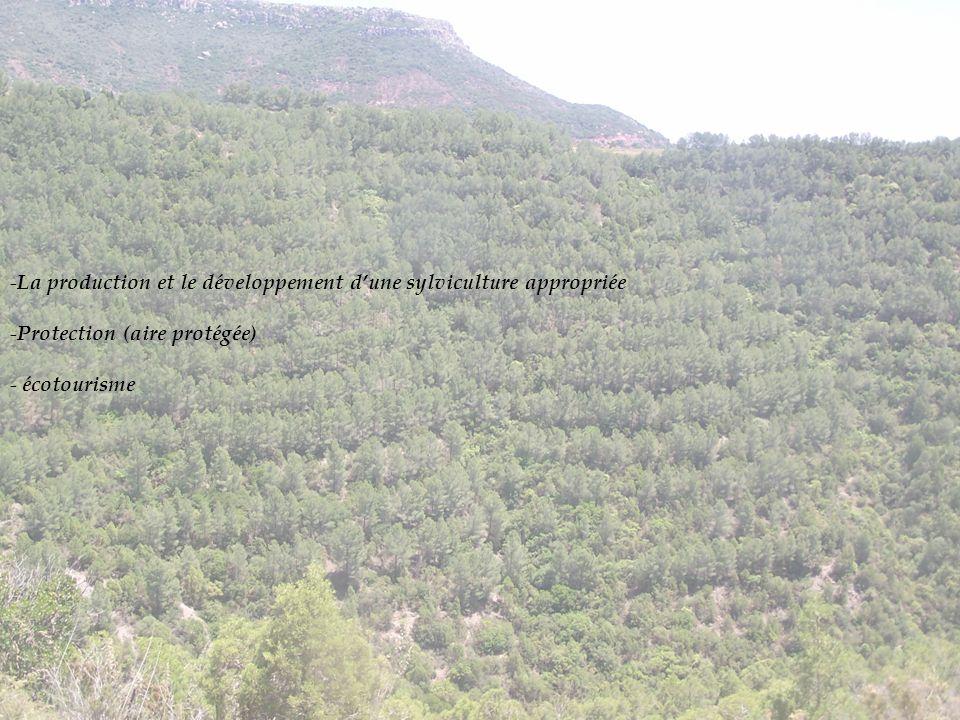 La production et le développement d'une sylviculture appropriée