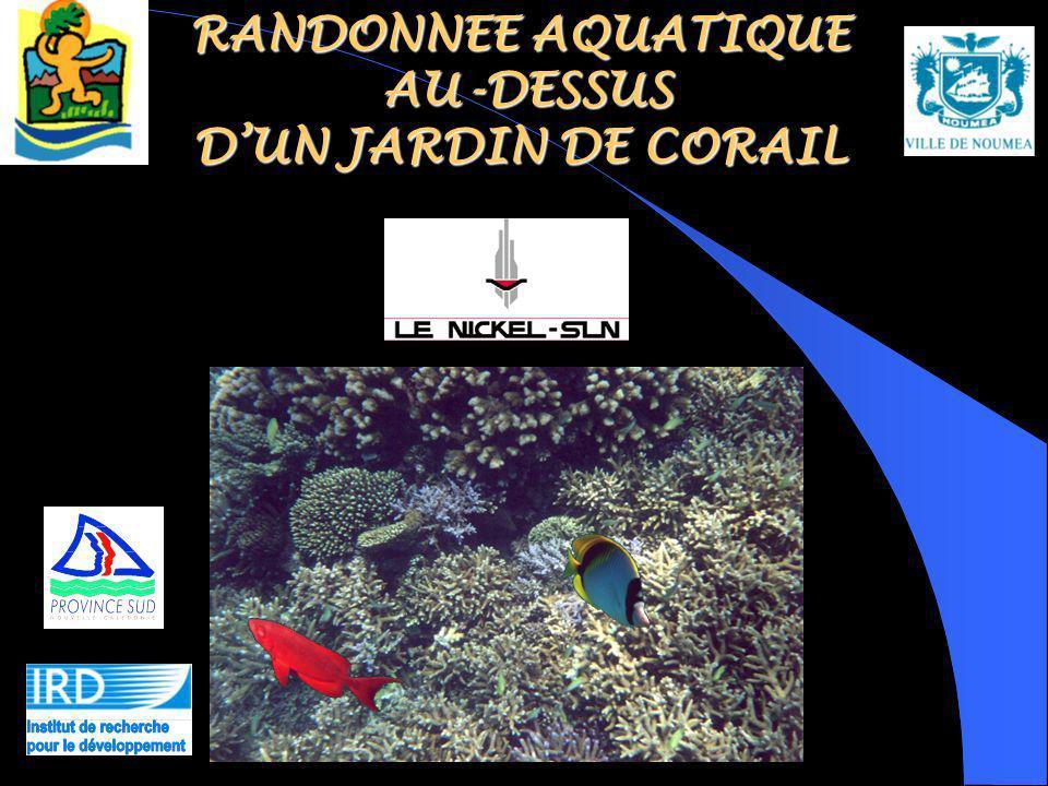 RANDONNEE AQUATIQUE AU-DESSUS D'UN JARDIN DE CORAIL
