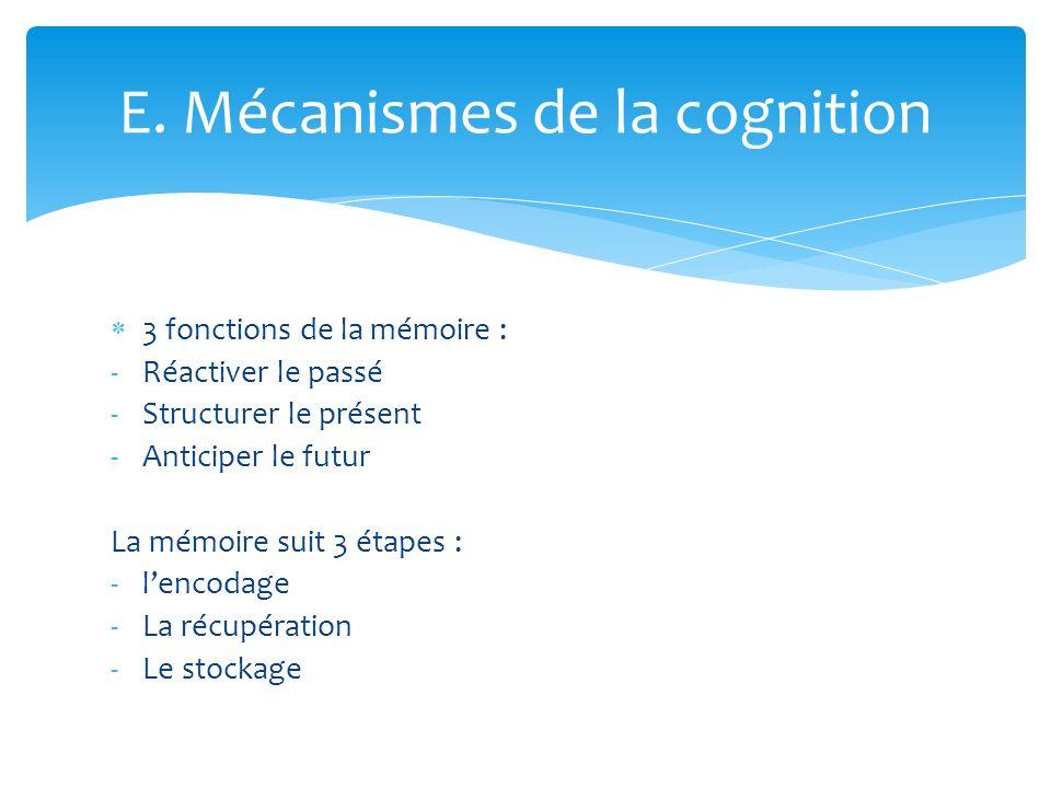 E. Mécanismes de la cognition