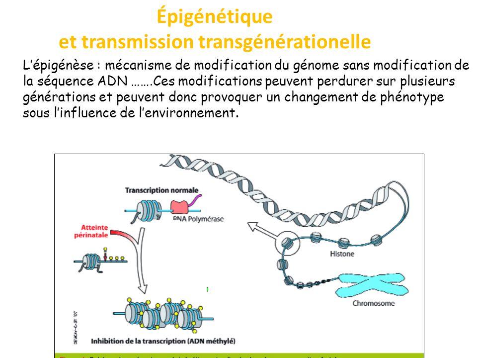 Épigénétique et transmission transgénérationelle