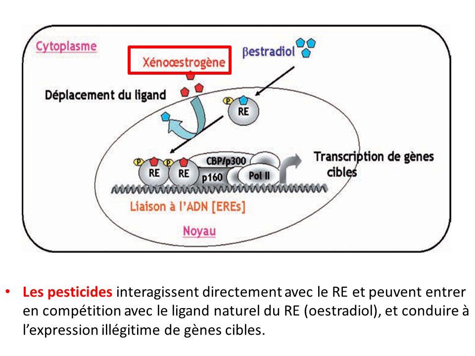 Les pesticides interagissent directement avec le RE et peuvent entrer en compétition avec le ligand naturel du RE (oestradiol), et conduire à l'expression illégitime de gènes cibles.