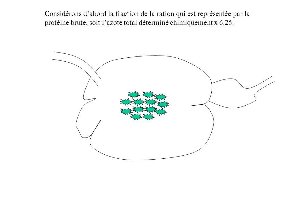 Considérons d'abord la fraction de la ration qui est représentée par la protéine brute, soit l'azote total déterminé chimiquement x 6.25.