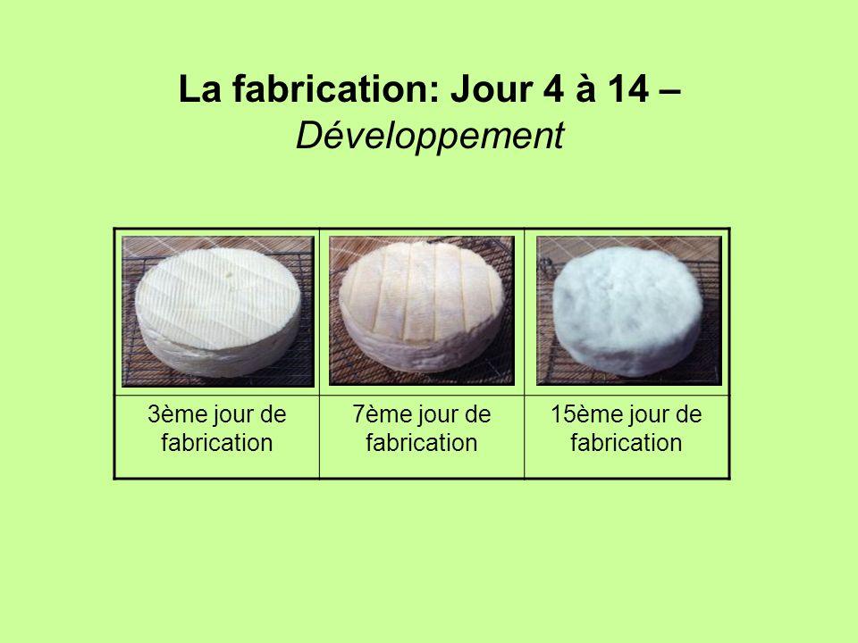 La fabrication: Jour 4 à 14 – Développement