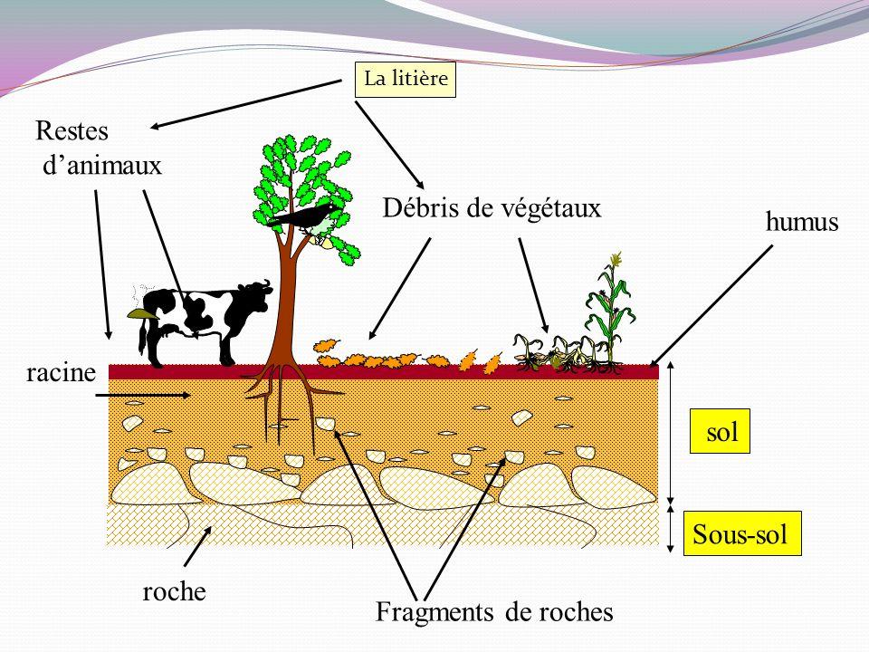 Restes d'animaux Débris de végétaux humus racine sol Sous-sol roche