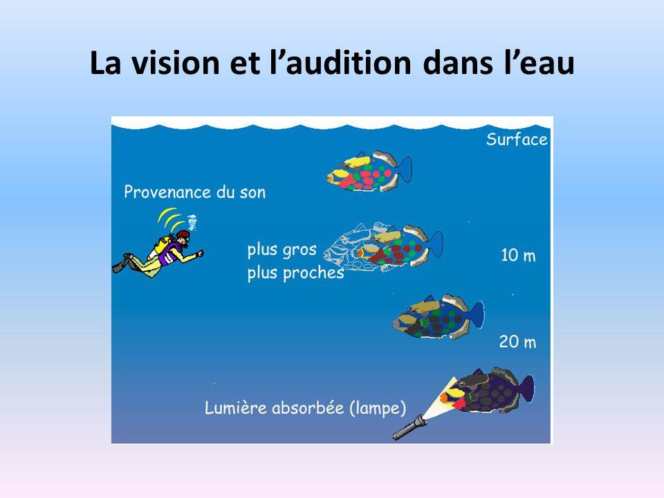 La vision et l'audition dans l'eau