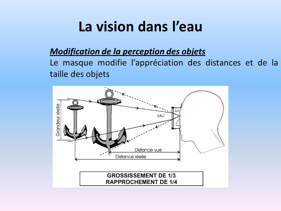 La vision dans l'eau Modification de la perception des objets